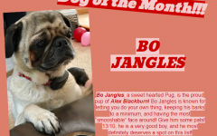 Dog of the Month ~ September