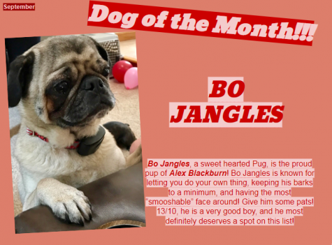 Dog of the Month ~ May
