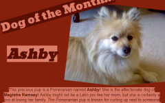 Dog of the Month ~ October