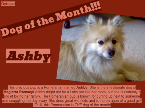 Dog of the Month ~ November