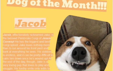 Dog of the Month ~ January