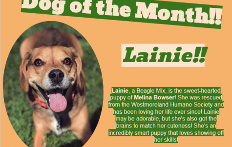 Dog of the Month ~ February