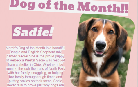 Dog of the Month ~ March