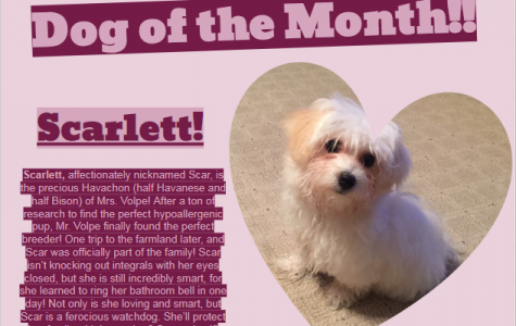 Dog of the Month ~ April