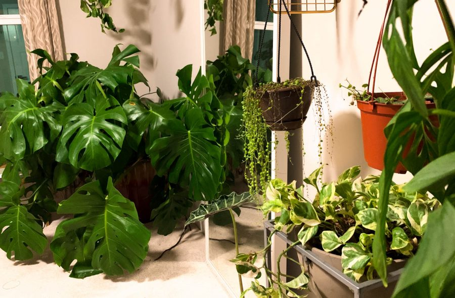 Houseplants bring many benefits to both your physical and mental wellbeing.