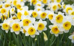 Along with the start of Spring comes beautiful flowers.
