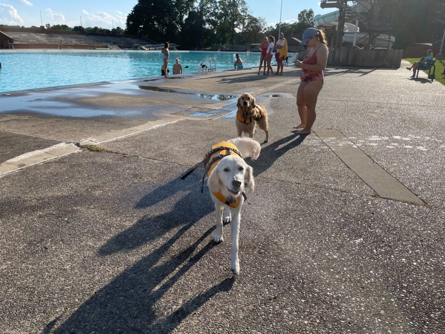 The swimming season at North Park ended with members bringing their beloved dogs to the pools.